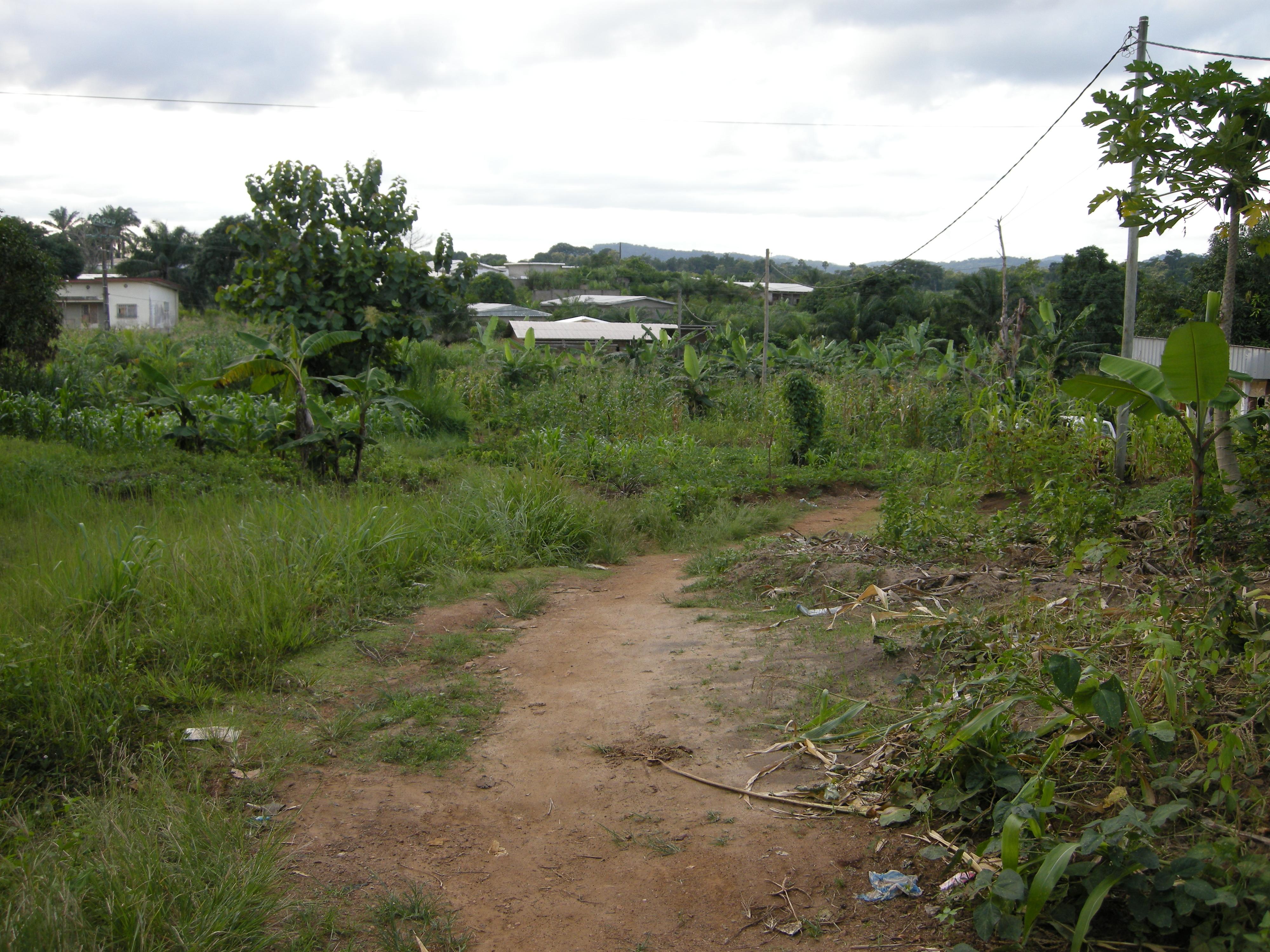 http://cameroon.betacantrips.com/wp-content/uploads/2010/07/wpid-DSCN3836.jpg